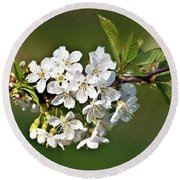 White Apple Blossoms Round Beach Towel