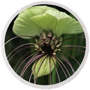 White Batflower Round Beach Towel