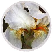 Round Beach Towel featuring the photograph White Bearded Iris by Sheila Brown