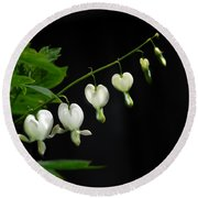 Round Beach Towel featuring the photograph White Bleeding Hearts by Susan Capuano