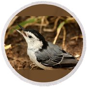 White Breasted Nuthatch 2 Round Beach Towel