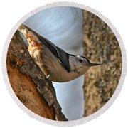 White Breasted Nuthatch 370 Round Beach Towel