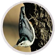 White-breasted Nuthatch On Tree Round Beach Towel