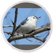 White-breasted Nuthatch Perched Round Beach Towel