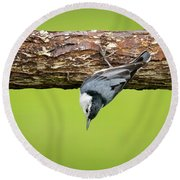 Round Beach Towel featuring the photograph White-breasted Nuthatches by Ricky L Jones