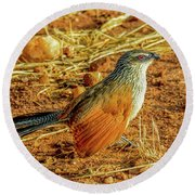 White-browed Coucal Round Beach Towel