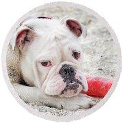 White Bull Dog Round Beach Towel