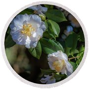Round Beach Towel featuring the photograph White Camelia 02 by Gregory Daley  PPSA