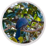 Round Beach Towel featuring the photograph White-cheeked Turaco by Donna Brown