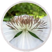 White Clematis Flower Garden 50146 Round Beach Towel