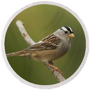 Round Beach Towel featuring the photograph White-crowned Sparrow by Doug Herr
