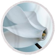Round Beach Towel featuring the photograph White Cyclamen. by Terence Davis