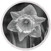 White Daffodil  Round Beach Towel