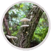 White Deer Mushrooms Round Beach Towel by Christopher L Thomley