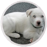 White Dog Blue Eyes Round Beach Towel