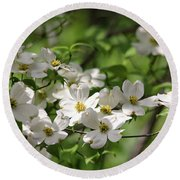 White Dogwood Blossoms Round Beach Towel