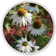 Round Beach Towel featuring the photograph White Echinacea by Suzanne Gaff