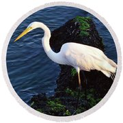 White Egret At Sunrise - Barnegat Bay Nj  Round Beach Towel