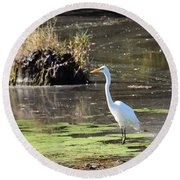 White Egret In The Shallows Round Beach Towel