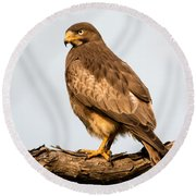 White-eyed Buzzard Butastur Teesa Round Beach Towel by Panoramic Images