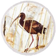 Round Beach Towel featuring the photograph White Faced Ibis In Reeds by Robert Frederick