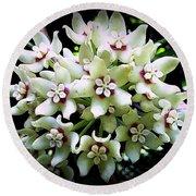 White Flowers Of Paleaku Gardens Round Beach Towel by Lori Seaman