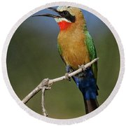 White Fronted Bee-eater Round Beach Towel