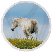 White Horse Of Cataloochee Ranch - May 30 2017 Round Beach Towel