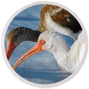 White Ibises Round Beach Towel