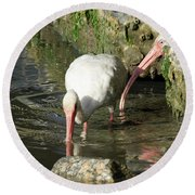 Round Beach Towel featuring the photograph White Ibis Couple by George Randy Bass