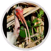White Ibis Eating Crayfish Round Beach Towel