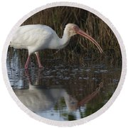 White Ibis Feeding Round Beach Towel