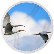 White Ibis Flock Round Beach Towel