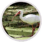 White Ibis Round Beach Towel by Gary Wightman