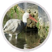 Round Beach Towel featuring the photograph White Ibis Headed Home by George Randy Bass