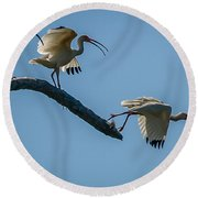 White Ibis Takeoff Round Beach Towel