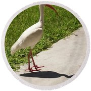 White Ibis Walking Down The Street Round Beach Towel