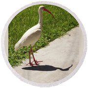 White Ibis Walking Down The Street Round Beach Towel