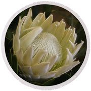 Round Beach Towel featuring the photograph White King Protea By Kaye Menner by Kaye Menner
