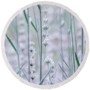 Round Beach Towel featuring the photograph White Lavender  by Andrea Anderegg
