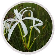 White Lilies In Bloom Round Beach Towel by Christopher L Thomley