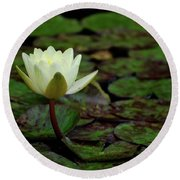 White Lily In The Pond Round Beach Towel