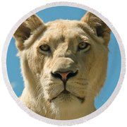 White Lion Round Beach Towel by Scott Carruthers