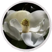 White Magnolia Flower Round Beach Towel