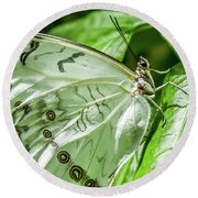Round Beach Towel featuring the photograph White Morpho Butterfly by Joann Copeland-Paul