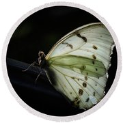 White Morpho In The Moonlight Round Beach Towel