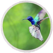 White Necked Jacobin Hummingbird Round Beach Towel
