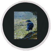 White-necked Raven Cliff-side Round Beach Towel by Jeff at JSJ Photography