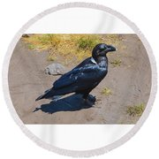 White-necked Raven Of Kilimanjaro Round Beach Towel by Jeff at JSJ Photography