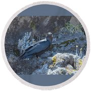 White-necked Raven With Kilimanjaro Flowers  Round Beach Towel by Jeff at JSJ Photography